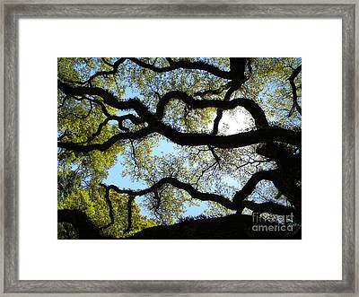 Old Oak Framed Print by JoAnn Wheeler