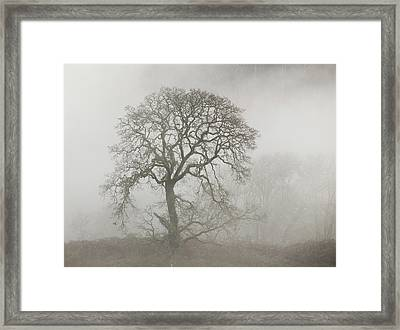 Framed Print featuring the photograph Old Oak Tree And Fog by Angie Vogel