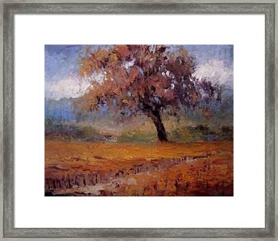 Old Oak Tree In The Vineyard Framed Print by R W Goetting