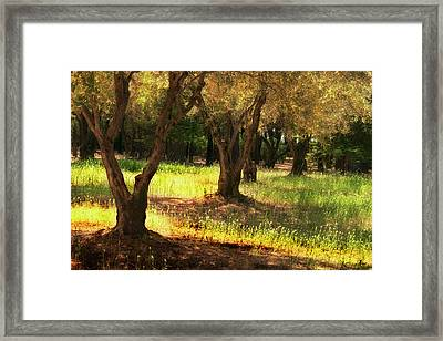 Old Olive Grove Framed Print by Frank Wilson