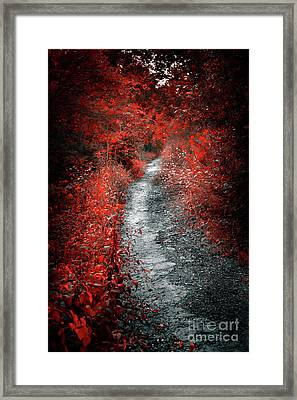 Old Path In Red Forest Framed Print by Elena Elisseeva