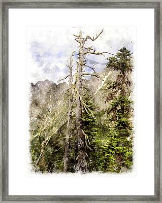 Old Pines Cascades Wc Framed Print by Peter J Sucy