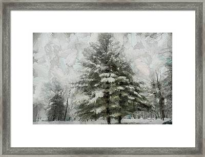 Old Piney Framed Print by Trish Tritz