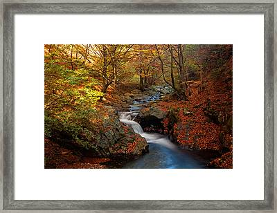 Old River Framed Print by Evgeni Dinev