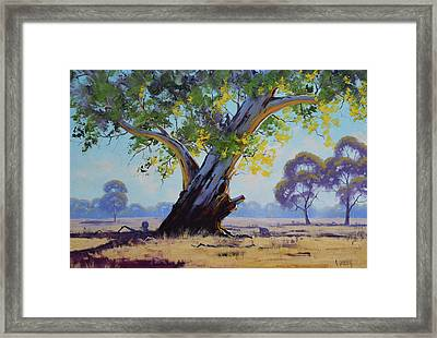 Old River Gum Australia Framed Print