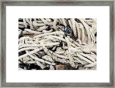 Old Rope Framed Print