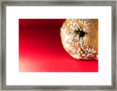 Old Rotting Apple With Fruit-rot On Red Background Framed Print by John Williams
