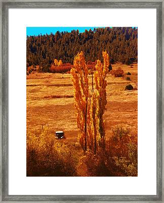 Old Rusty And Penasco Lombardies Framed Print