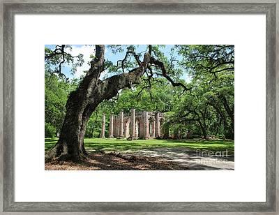 Old Sheldon Church Ruins With Live Oak Framed Print