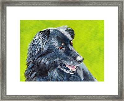 Old Shep Framed Print