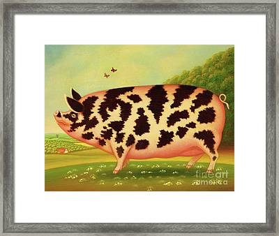 Old Spot Pig Framed Print
