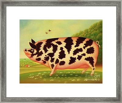 Old Spot Pig Framed Print