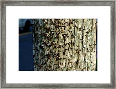 Old Telephone Pole With Staples  Framed Print by Micah May
