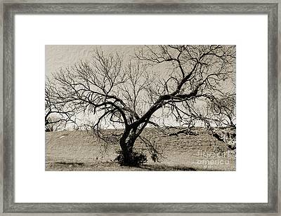 Old Texas Frontier  Framed Print by Ray Shrewsberry
