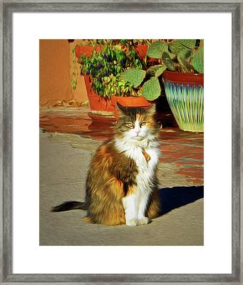 Framed Print featuring the photograph Old Town Cat by Nikolyn McDonald