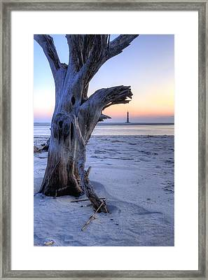 Old Tree And Morris Island Lighthouse Sunrise Framed Print