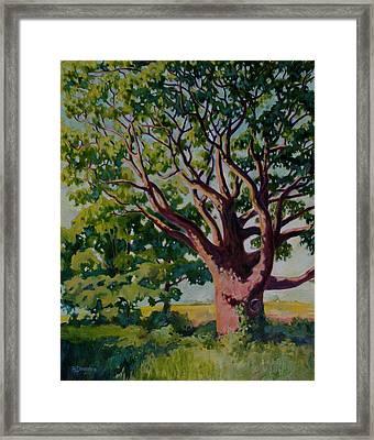 Old Tree Framed Print by Andrew Danielsen
