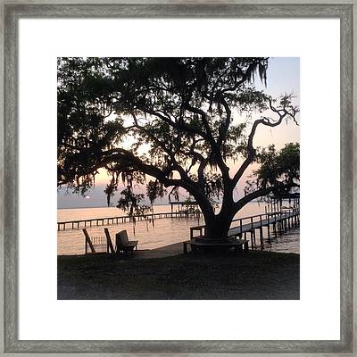 Old Tree At The Dock Framed Print