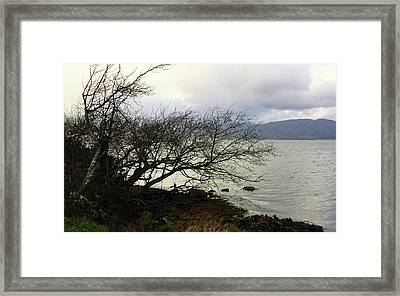 Framed Print featuring the photograph Old Tree By The Bay by Chriss Pagani