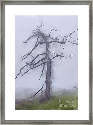 Old Tree In Fog In The Blue Ridge Ap Framed Print by Dan Carmichael