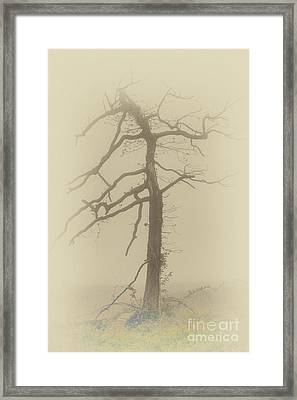 Old Tree In Fog In The Blue Ridge Fx Framed Print
