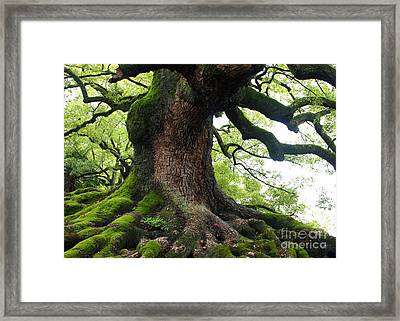 Old Tree In Kyoto Framed Print by Carol Groenen