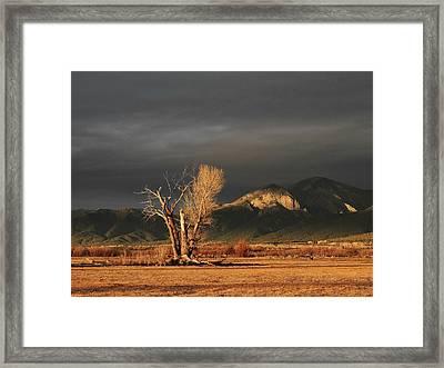 Sunset On The Old Cottonwood Framed Print