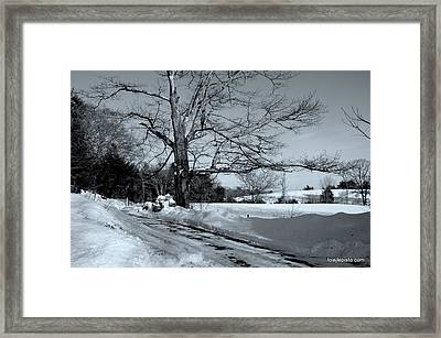 Framed Print featuring the photograph Old Tree by Lois Lepisto