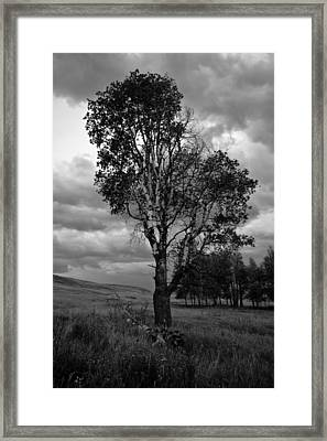 Old Tree, Lost Trail Wildlife Refuge Framed Print
