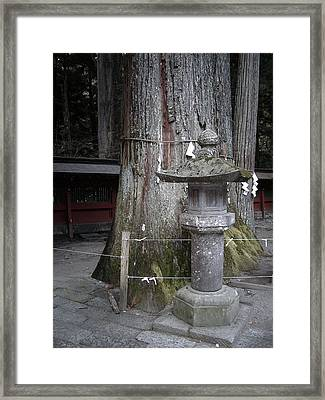 Old Tree Framed Print by Naxart Studio