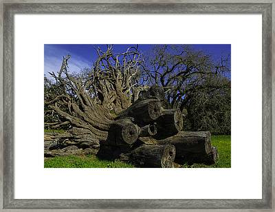 Old Tree Roots Framed Print