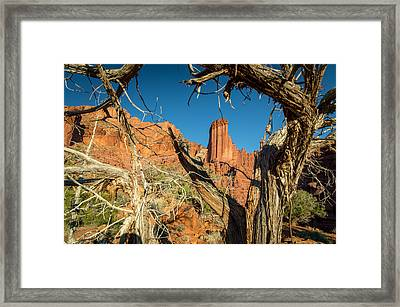 Old Trees At Fisher Towers Framed Print by Michael J Bauer