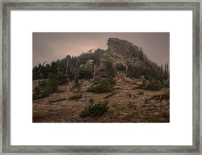 Old Trees Reaching Through The Fog Framed Print