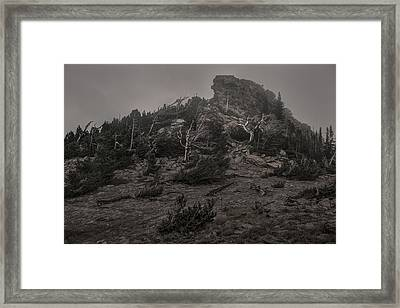 Old Tress Reaching Through The Fog Bw Framed Print