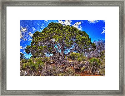 Old Utah Juniper Framed Print