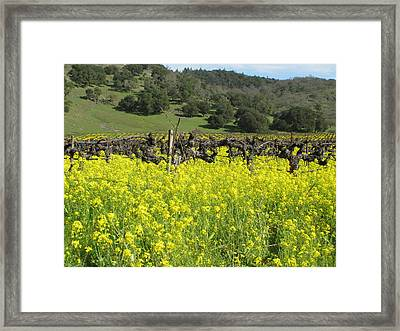Old Vines Framed Print by Kim Pascu