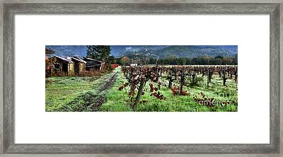 Old Vineyard Barns Framed Print
