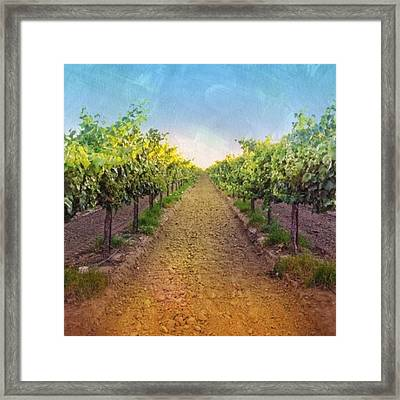 Old #vineyard Photo I Rescued From My Framed Print by Shari Warren