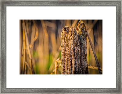 Old Weathered Fence Post Framed Print