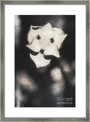 Old Weathered Flowers Framed Print