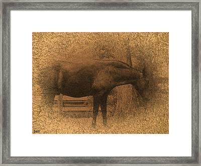 Old West Horse Framed Print by Debra     Vatalaro