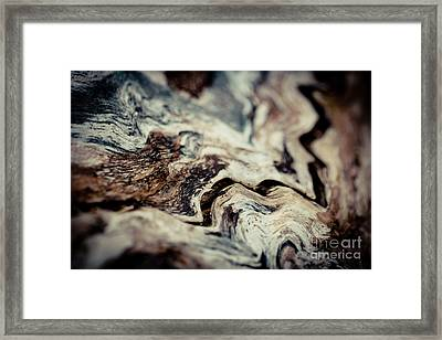 Old Wood Abstract Vintage Background Texture  Framed Print