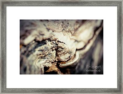 Old Wood Abstract Vintage Texture Fotografika.lv Framed Print