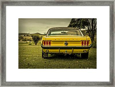 Old Yellow Mustang Rear View In Field Framed Print by Design Turnpike