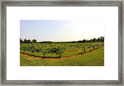 Old York Winery Framed Print by Brian Manfra