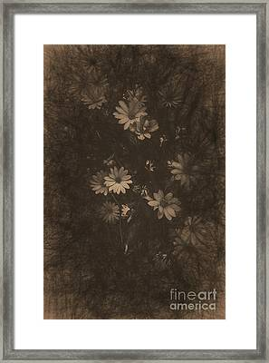 Olden Day Daisies  Framed Print