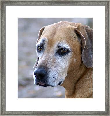 Oldie But A Cutie Framed Print by Debbie May
