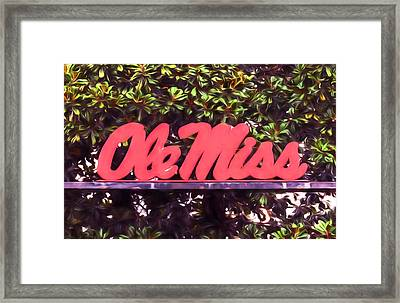 Ole Miss Magnolias Framed Print by JC Findley
