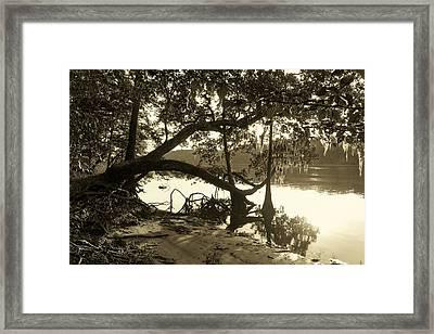 Ole Suwannee River Framed Print by Sheri McLeroy