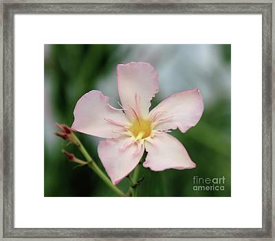 Oleander Agnes Campbell  Framed Print